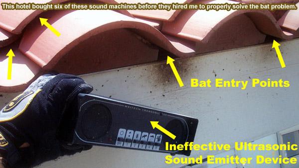 Bat Repellent Natural Home Remedy